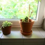 IMPREGNO Stein – Naturstein imprägnierung Terrassenplatten